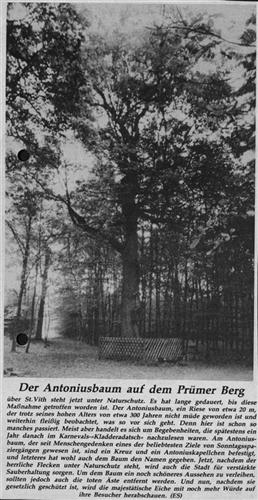 Der Antoniusbaum auf dem Prümer Berg