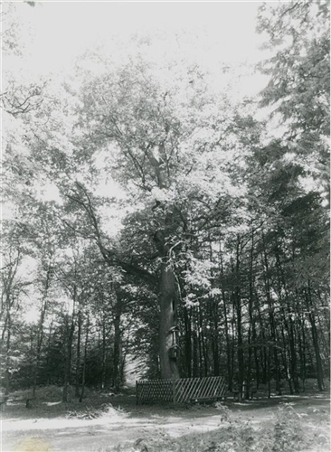 Antoniusbaum