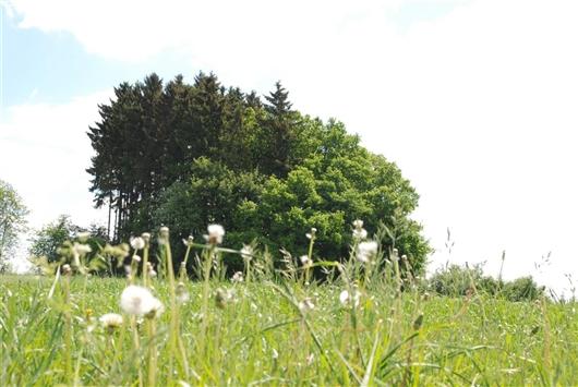 Der Hochtumsknopf bei Maldingen