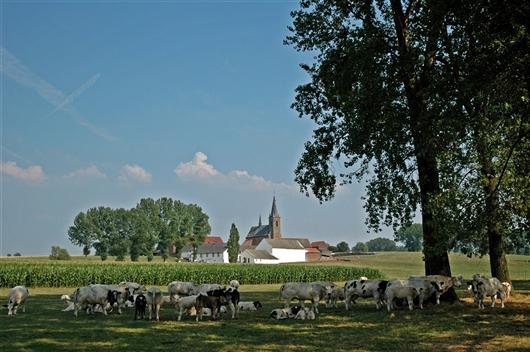 Ehemalige Abteikirche und Gehöft Cantimpré, Bellingen (Pepingen)