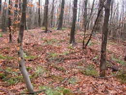 Hügelgräber Preuswald