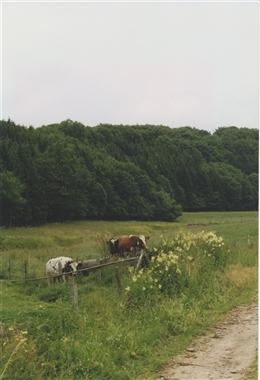 Afst, 2000: Steinbachtal