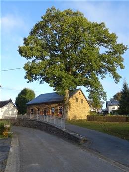Alte Schule mit Baum